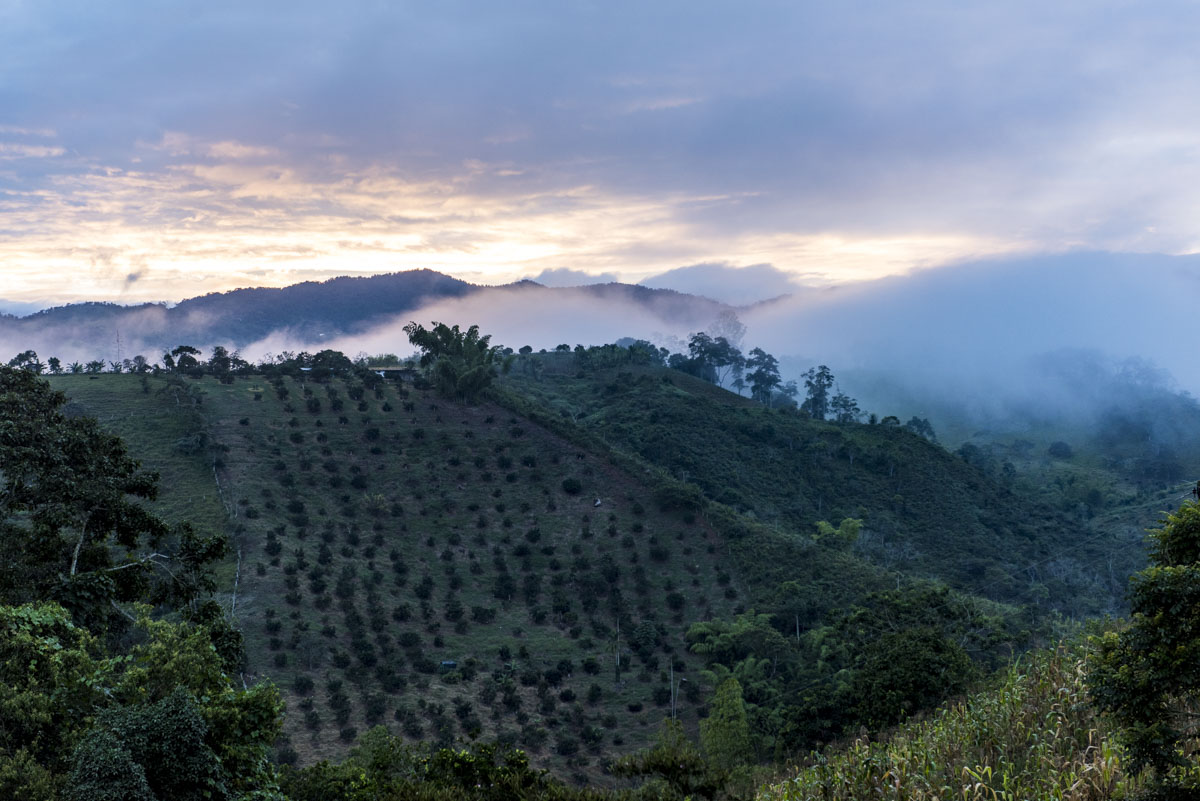 Valle del Cauca, Coffee, Cafetales, Colombia